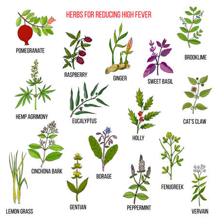 Best herbal remedies for reducing high fever isolated on white