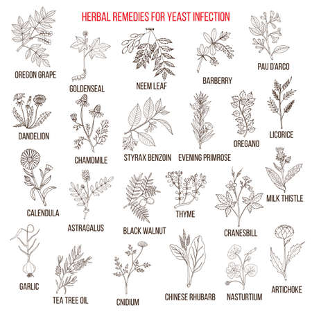 Best herbal remedies for yeast infection Stock Photo