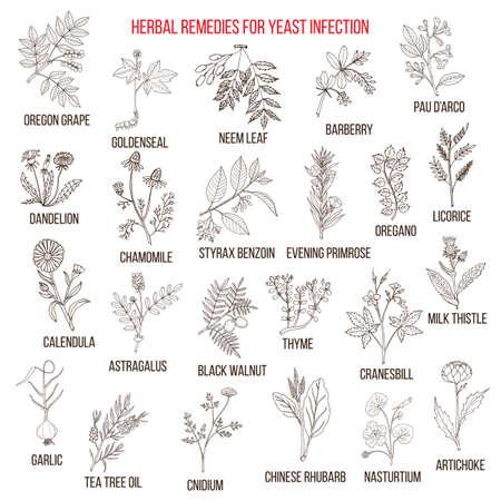 Best herbal remedies for yeast infection Standard-Bild