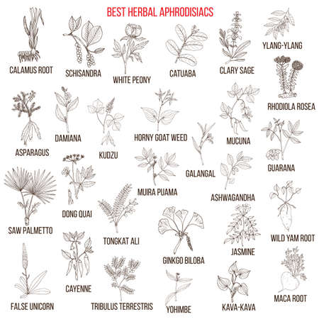 Best natural herbal aphrodisiacs Illustration