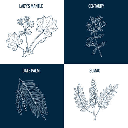 Set of four eatable and medicinal plants