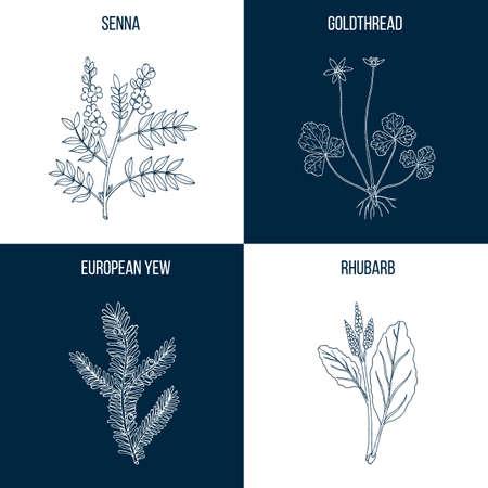 Set van vier hand getrokken eetbare en medicinale planten Stock Illustratie