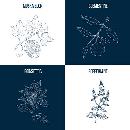 Vector collection of four hand drawn medicinal plants