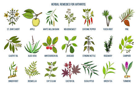 Best herbal remedies for arthritis Vector illustration.