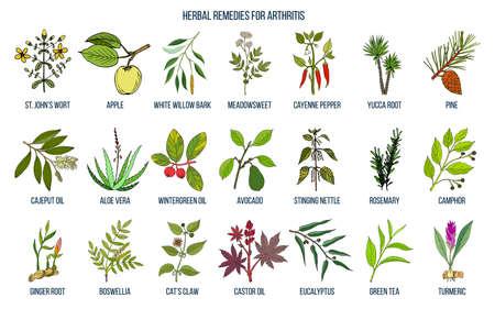 I migliori rimedi a base di erbe per l'artrite Illustrazione vettoriale. Vettoriali