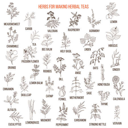 Best herbs for teas. Hand drawn vector set of natural plants