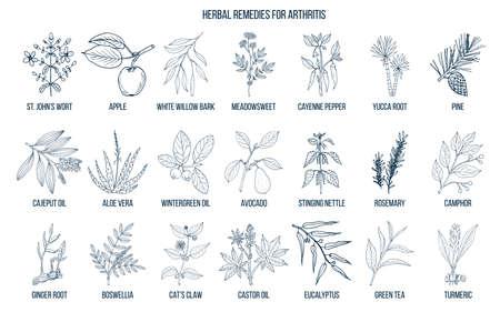 Meilleurs remèdes à base de plantes pour l'arthrite. Ensemble de vecteur dessiné à la main des plantes médicinales