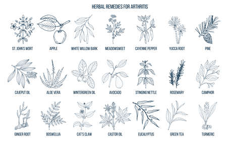 Best herbal remedies for arthritis. Hand drawn vector set of medicinal plants