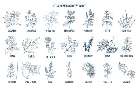 Best herbal remedies for wrinkles