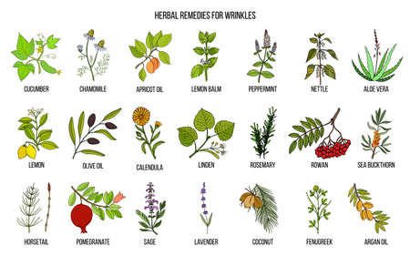 Best herbal remedies for wrinkles. Hand drawn vector set of medicinal plants