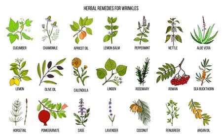 Meilleurs remèdes à base de plantes pour les rides. Ensemble de vecteur dessiné à la main des plantes médicinales Vecteurs