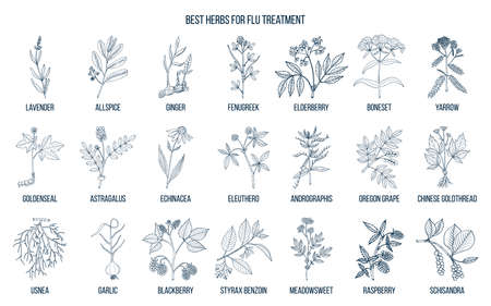 Best herbs for flu treatment in white background.