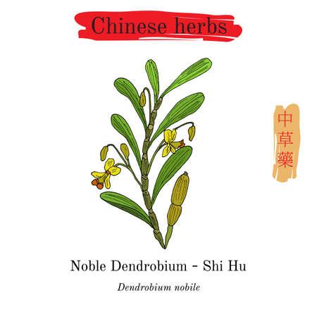 Medicinal herbs of China. Noble Dendrobium