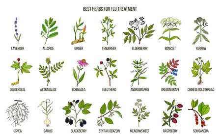 Best herbs for flu treatment