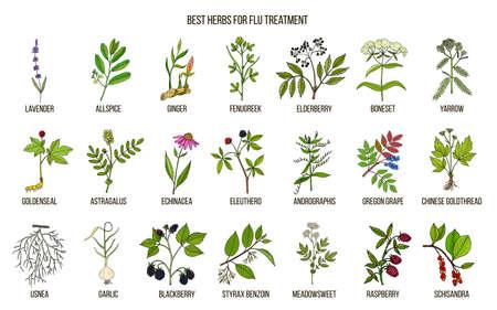 mejor hierbas para tratamiento de gripe
