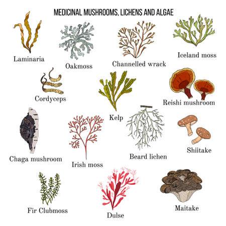 Heilpilze, Flechten und Algen Vektorgrafik