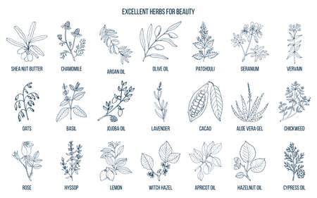 Best herbs for beauty.