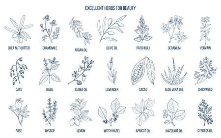 Najlepsze zioła dla urody. Ilustracje wektorowe