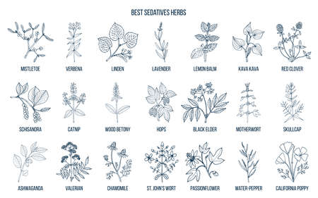 Collection of best sedatives herbs in outline illustraton.