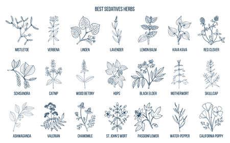 Verzameling van de beste kalmerende kruiden in overzicht illustraton. Stock Illustratie