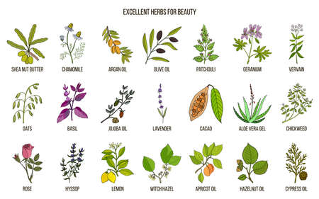 Collection of best herbs for beauty care illustration. Stock Illustratie