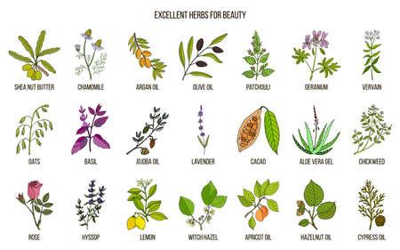 Verzameling van de beste kruiden voor schoonheidsverzorging illustratie. Vector Illustratie