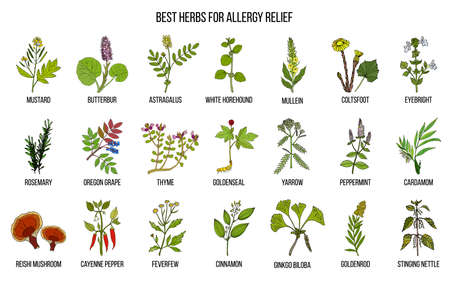 Best herbs for allergy relief Stock Photo