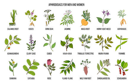 Best herbal aphrodisiacs. Hand drawn vector set of medicinal plants Иллюстрация