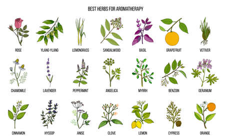 Best herbs for aromatherapy Vector illustration.