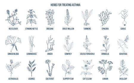 Natuurlijke kruidencollectie voor behandeling van astma. Hand getekend botanische vectorillustratie