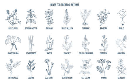 Natural herbs collection for asthma treating. Hand drawn botanical vector illustration Illustration