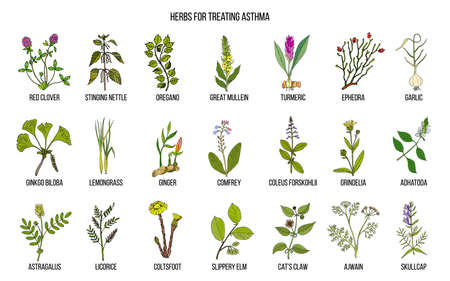 Natural herbs collection for asthma treating
