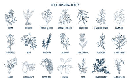 Best herbs for natural beauty. Hand drawn vector set of medicinal plants
