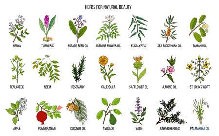 Meilleures herbes pour la beauté naturelle. Ensemble de vecteur dessiné à la main des plantes médicinales