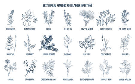 Best herbal remedies for bladder infections Illustration