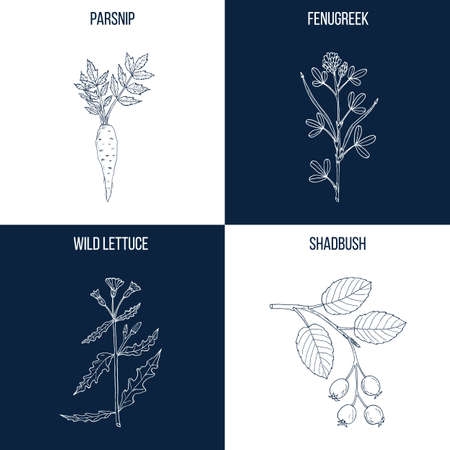 Set of four hand drawn eatable and medicinal plants. Ilustracja