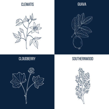 Set of four hand drawn eatable and medicinal plants. Illustration