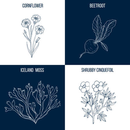 Vector collection of four hand drawn medicinal and eatable plants,  イラスト・ベクター素材