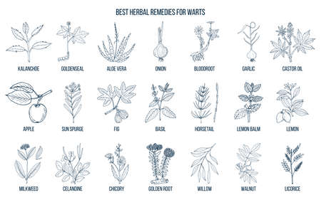 Best herbal remedies to treat warts. Hand drawn vector set of medicinal plants Ilustracja