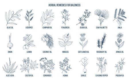 Best herbal remedies for baldness Vettoriali