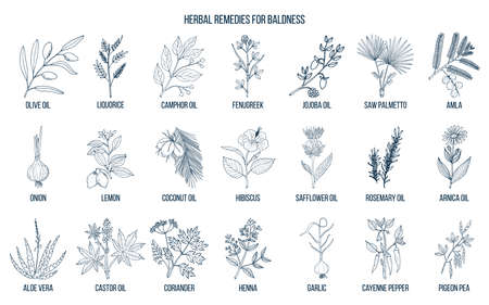 Best herbal remedies for baldness Vectores