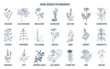 Best herbal remedies to treat amenorrhea