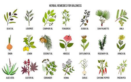 Best herbal remedies for baldness Illustration