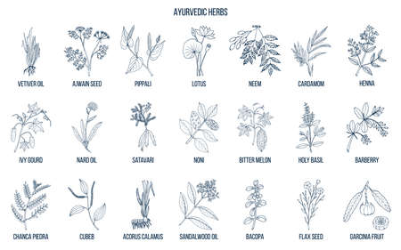 Ayurvedic herbs, natural botanical set. Hand drawn vector illustration Vettoriali