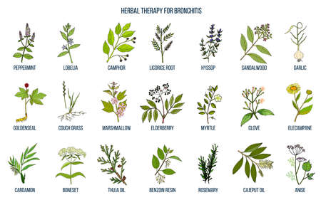 Herbal therapy for bronchitis. Hand drawn vector set of medicinal plants Vector Illustration