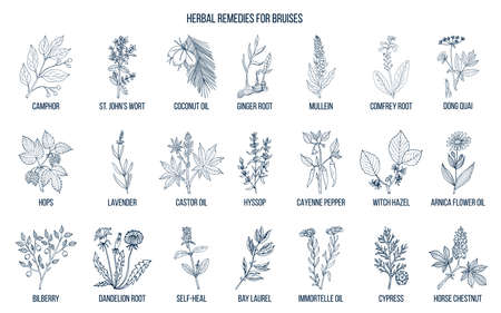 Best herbal remedies to treat bruises  イラスト・ベクター素材