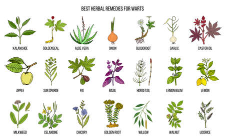 Best herbal remedies to treat warts Ilustracja