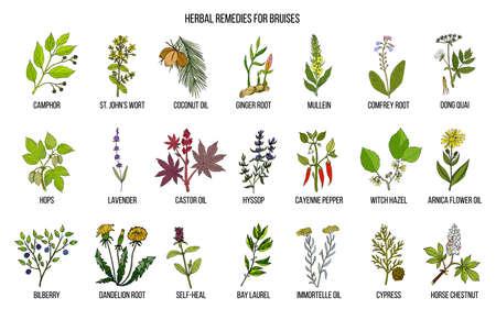 Best herbal remedies to treat bruises illustration.