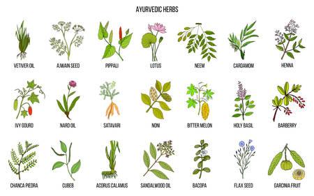 Ayurvedic herbs, natural botanical set