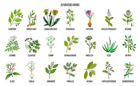 Ayurvedic herbs, natural botanical set Banco de Imagens - 94550148